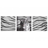 Blue Eyes Striped Tiger Wall Canvas by Just Home